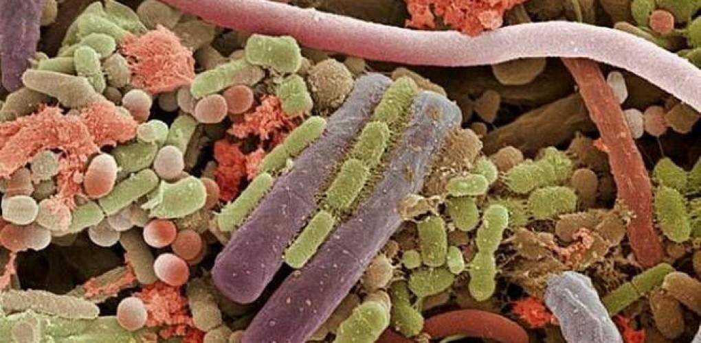 Lotta ai batteri del cavo orale!