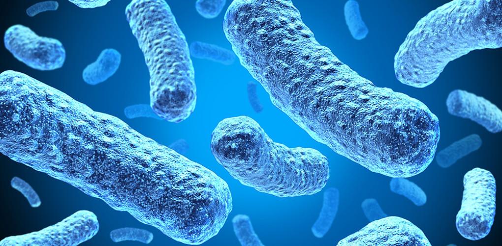Dove si annidano i batteri della bocca?